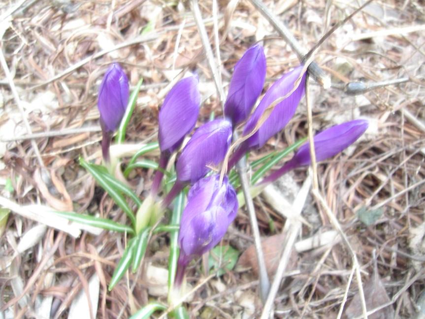 小さい春_a0025572_23453563.jpg