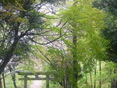 雨の夜須町。【3】 「宝満宮」から降りていきます。_e0188087_056290.jpg