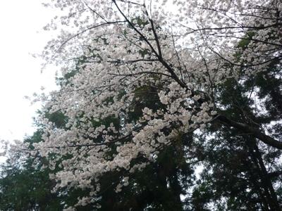 雨の夜須町。【1】_e0188087_063981.jpg