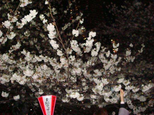 『夜桜』_e0124490_21383823.jpg