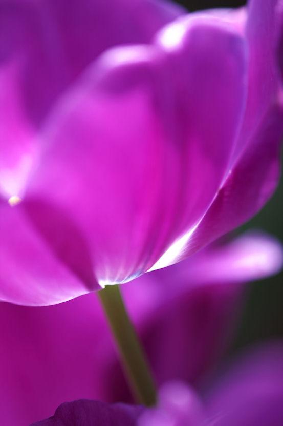 春の日に照らされて_f0195893_1752197.jpg