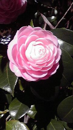 春爛漫_b0172896_15565655.jpg