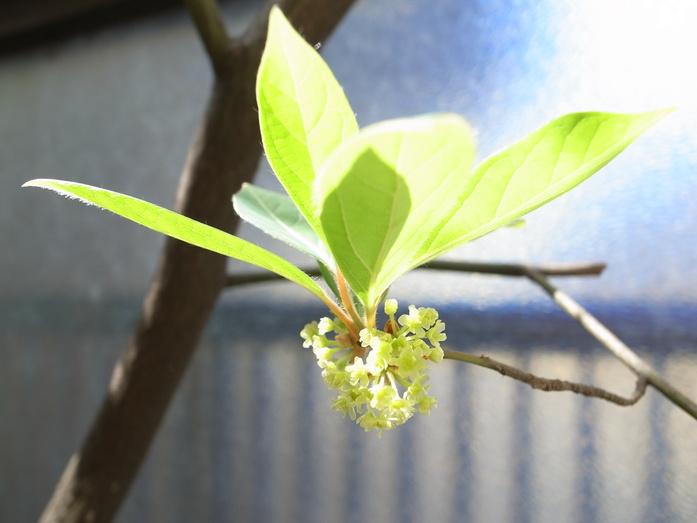 春の兆し2_f0223603_1825742.jpg