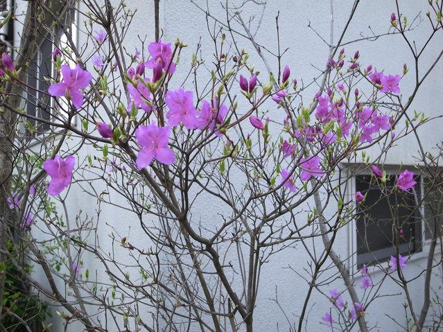 春の兆し2_f0223603_18403429.jpg