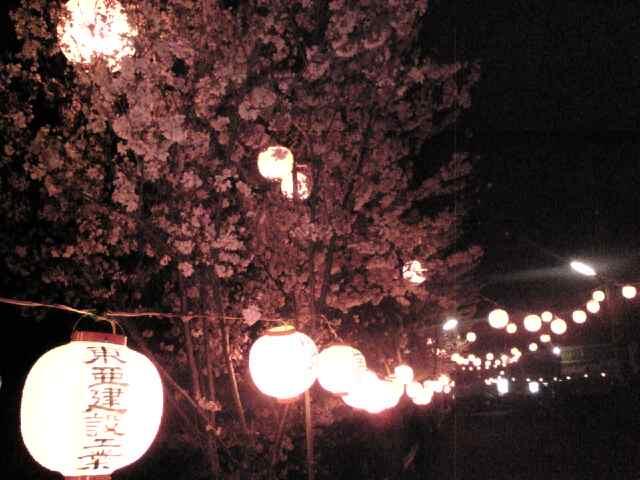 夜桜_b0080104_205611.jpg