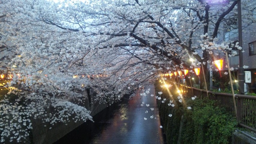 SAKURA★桜_f0128409_11231587.jpg