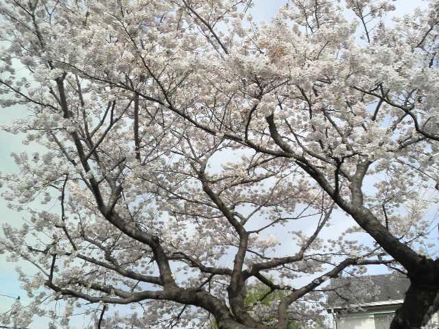 ららぽーと新三郷_e0160513_23272016.jpg