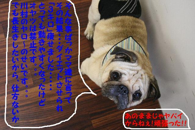 b0130018_15423814.jpg