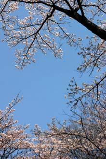 花見日和_e0103024_1151746.jpg