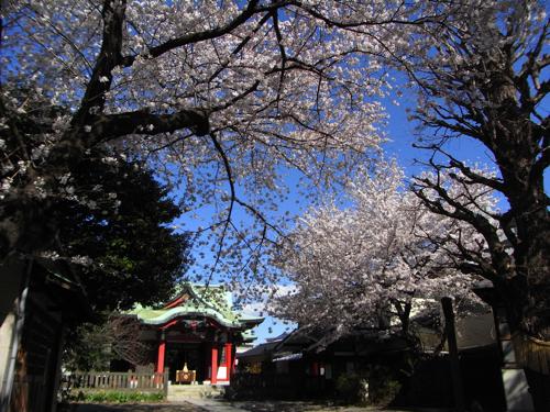 春、桜の季節_a0006744_22581292.jpg