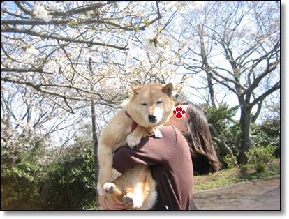 ドタバタしながらも、、、桜!_c0049950_2315851.jpg