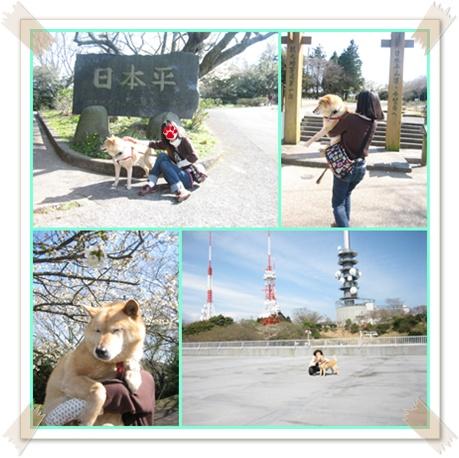 ドタバタしながらも、、、桜!_c0049950_2343685.jpg