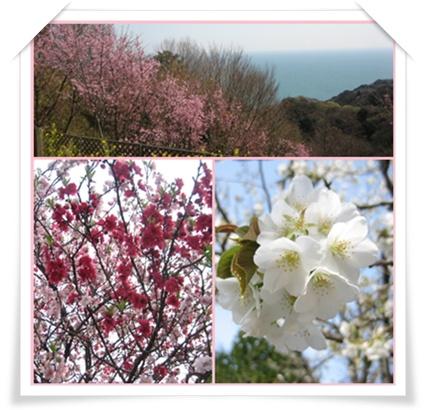 ドタバタしながらも、、、桜!_c0049950_2391149.jpg