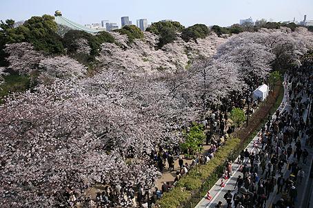 東京桜_a0086851_2210274.jpg