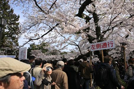 東京桜_a0086851_2211215.jpg