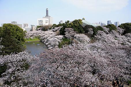東京桜_a0086851_221649.jpg