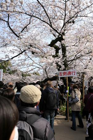 東京桜_a0086851_224920.jpg