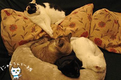 猫密度が上がる夜と、あからさまな視線_e0031853_4241611.jpg