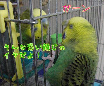 f0196665_012173.jpg