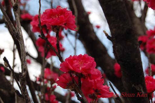 鴨川の桜_a0164068_23273773.jpg