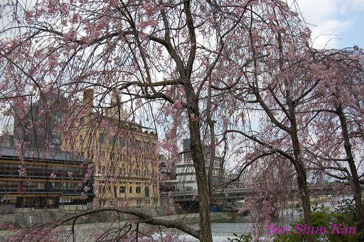 鴨川の桜_a0164068_23275580.jpg