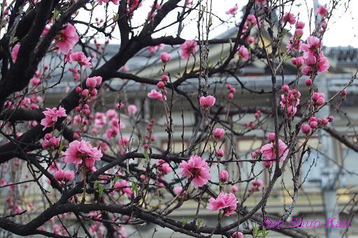 鴨川の桜_a0164068_2330618.jpg