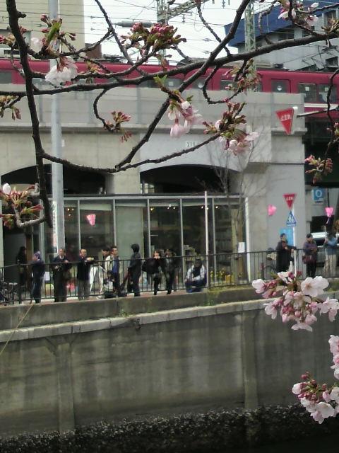 黄金町アートブックバザール&桜まつり開催中_b0148170_14352761.jpg