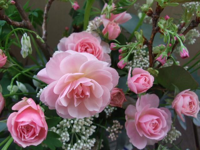 オークリーフ(桜の季節に)_f0049672_1159364.jpg