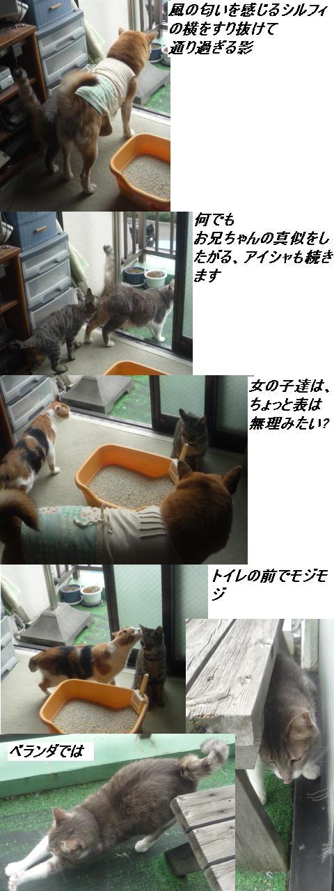 窓を開ければ・・・・・_b0112380_10131953.jpg