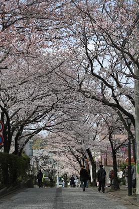 桜満開_b0189489_22295090.jpg