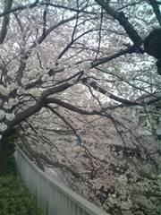 お花見日和で仕事日和_c0223192_18272459.jpg