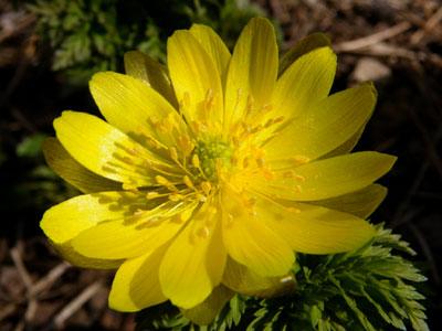 ようやく咲いたクロッカス♪_a0136293_1327264.jpg