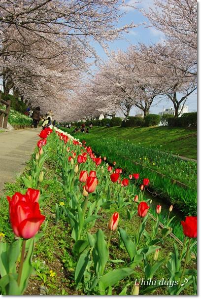 桜咲く緑道をお散歩♪_f0179404_2273021.jpg