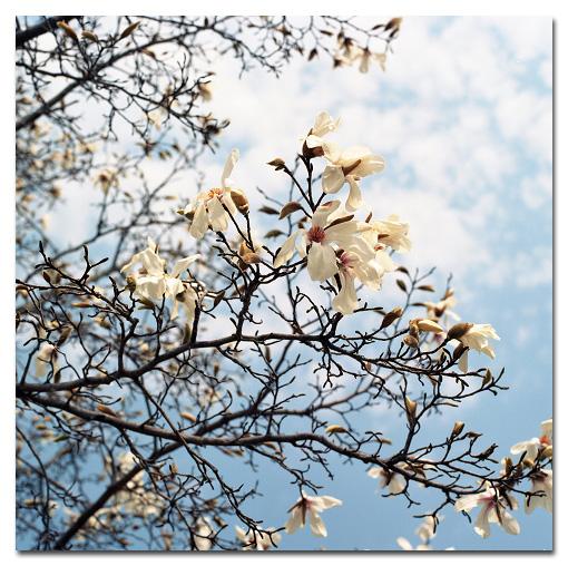 #2619 白い花_e0175405_891580.jpg