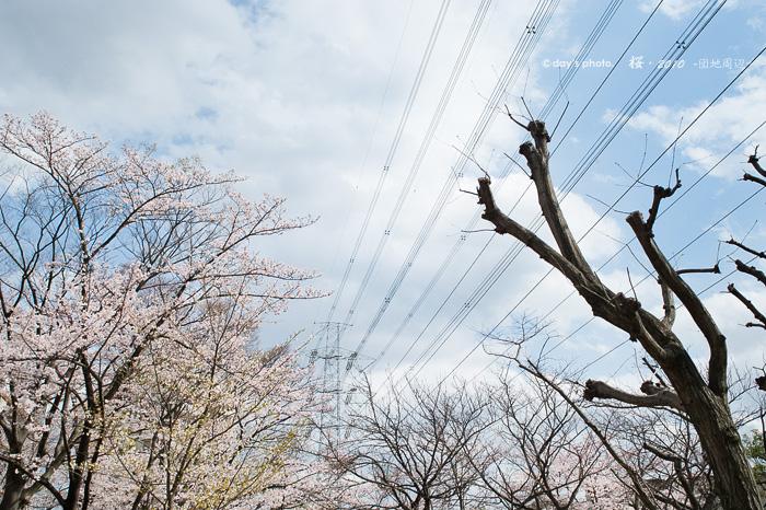 団地桜景 #02_e0117517_2303769.jpg