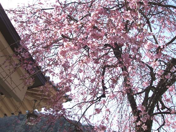 山中座 春・桜の装い_f0040218_14272975.jpg