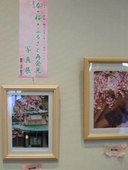 山中座 春・桜の装い_f0040218_1640591.jpg