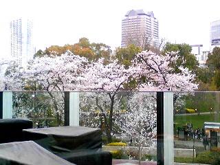 桜咲く♪_d0133225_16503199.jpg