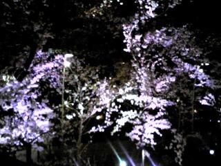 桜咲く♪_d0133225_17231349.jpg