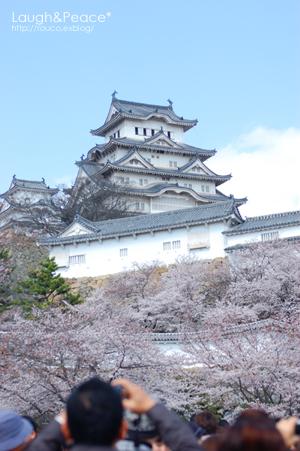 桜の下で再会_e0195830_73241100.jpg