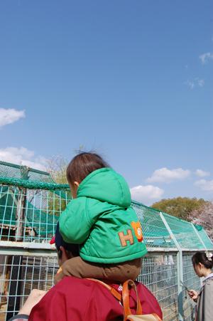 桜の下で再会_e0195830_7332963.jpg