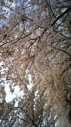 今日は、花見日和!!_a0167735_20335711.jpg