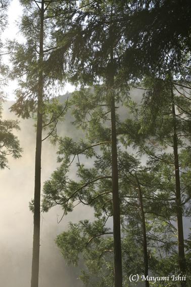 霧と雲と光と 熊野_a0086851_1339570.jpg