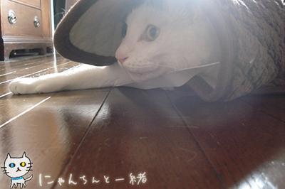 空振り_e0031853_22143812.jpg