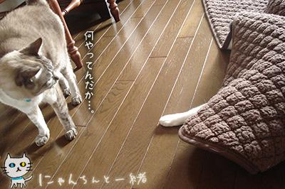 空振り_e0031853_22145725.jpg