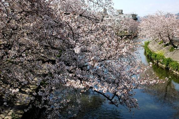 花のある風景_b0093754_0205372.jpg
