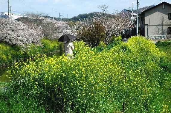 花のある風景_b0093754_0211017.jpg
