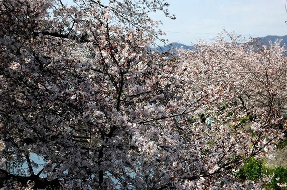 花のある風景_b0093754_021113.jpg