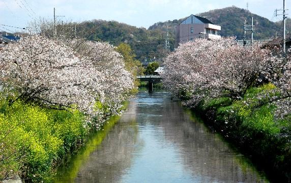 花のある風景_b0093754_0213313.jpg