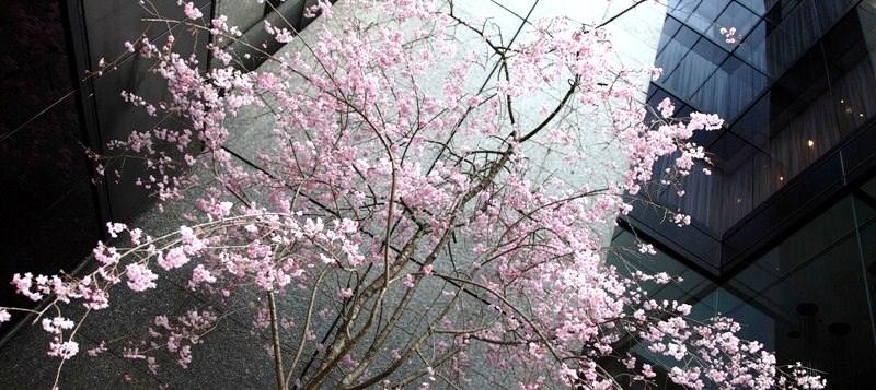 10年4月4日・上京_c0129671_18351961.jpg